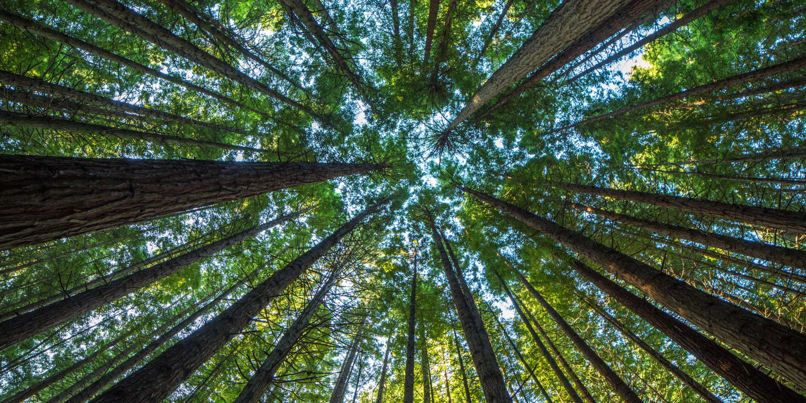 A Beginner's Guide to Sustainability